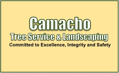 Camacho Tree Services & Landscaping - Camacho Tree Services & Landscaping - 817-717-4886 The Good